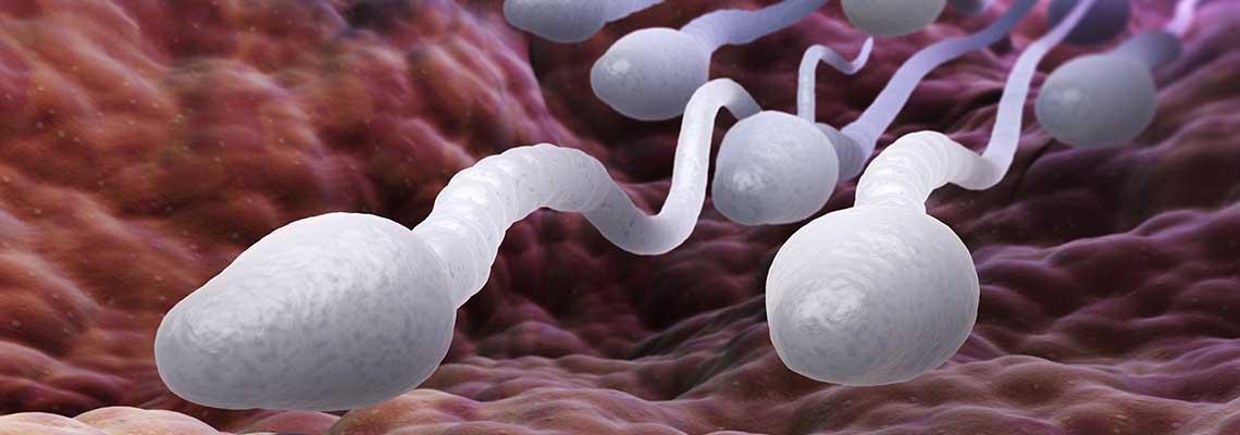 Sperma-Fertilitätstest